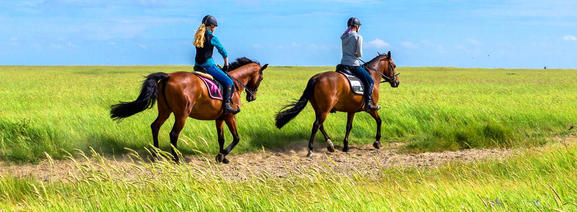 equestrian helmet wholesale